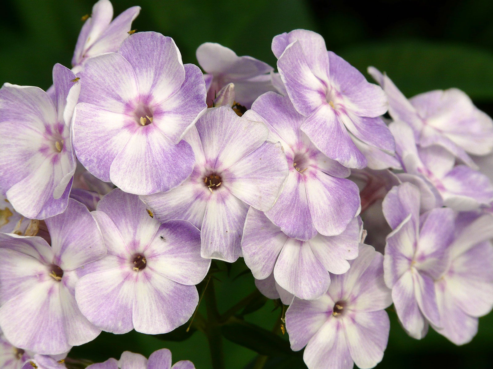 Plantes pour bordure naturelle