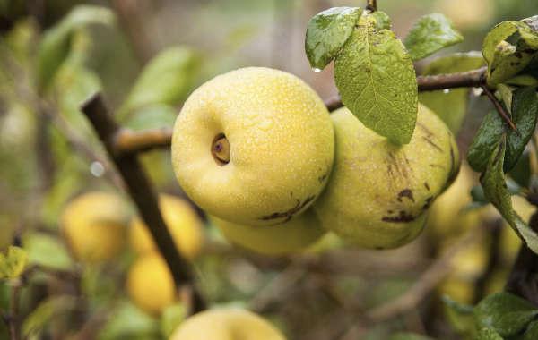 Fruits et petits fruits
