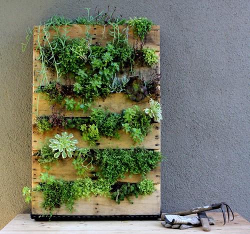 Mur végétal avec une palette