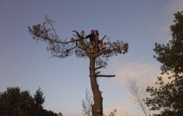 Abattage d'arbres par le Chêne et le Hérisson