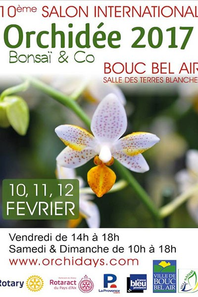 Orchidée Bonsaï & Co