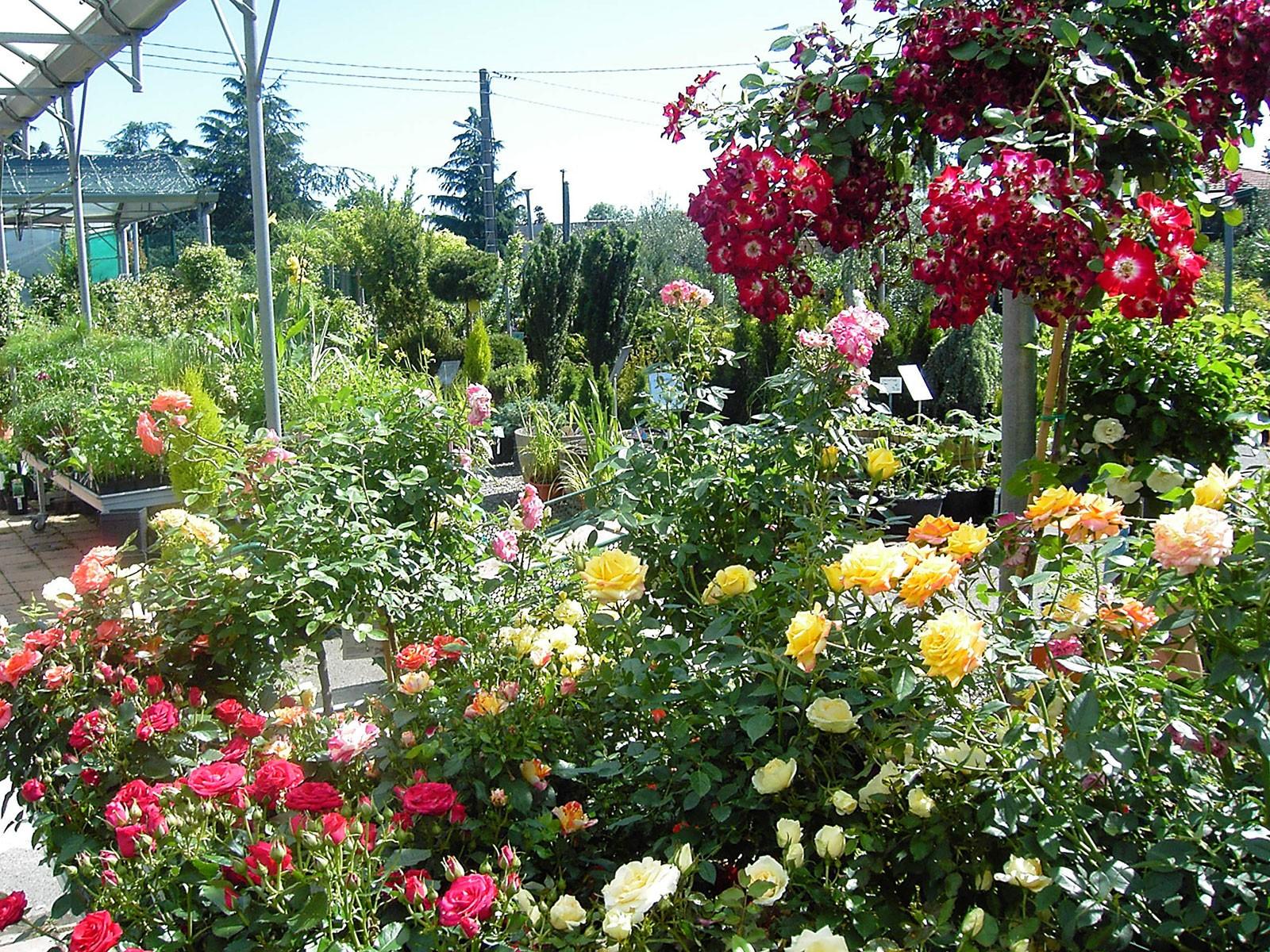 Jardinerie Pas Cher Toulouse espaces verts du languedoc - jardinerie et pépinière familiale