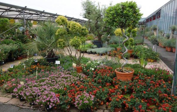 Jardinerie Les espaces verts du Languedoc