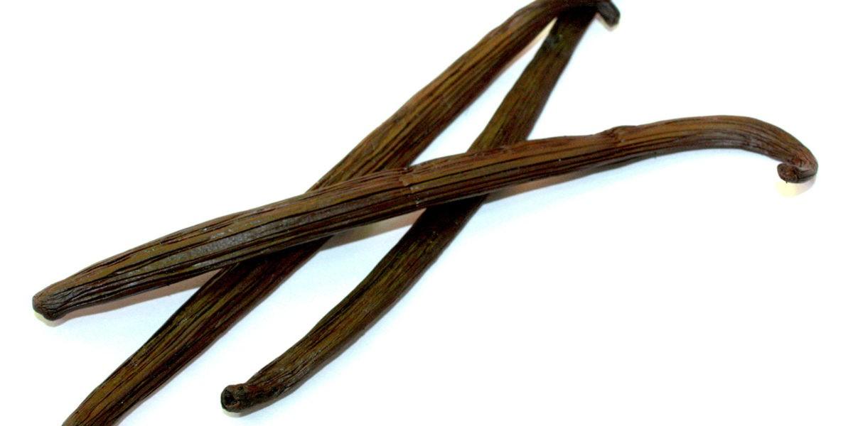 Classification et qualités des gousses de vanille