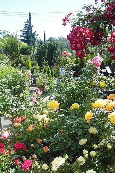 Portes ouvertes à la jardinerie Les espaces verts du Languedoc