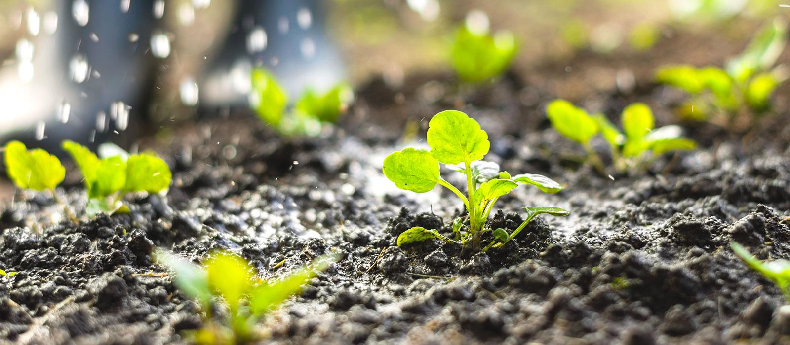 Savez vous planter chez nous partage de jardin entre for Jardinier pour particulier