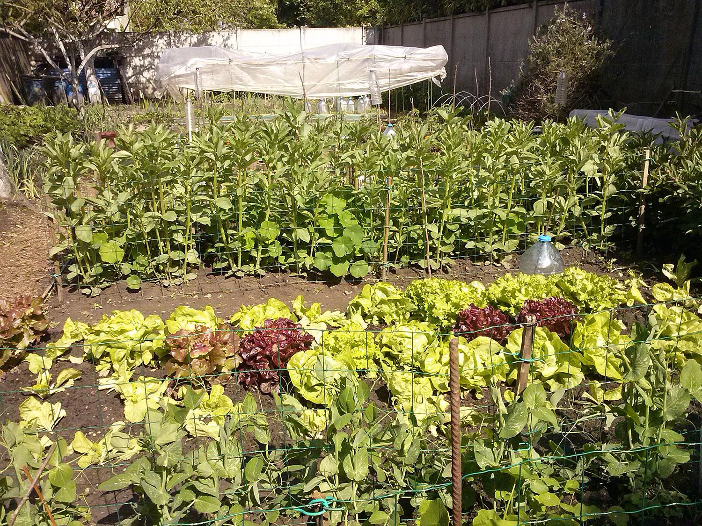 Gérard jardine chez sa voisine