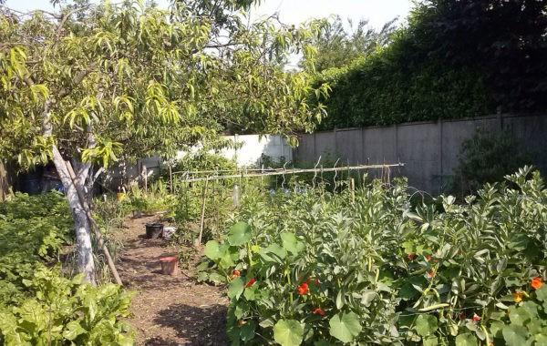 Gérard cultive son premier potager dans le jardin de sa voisine