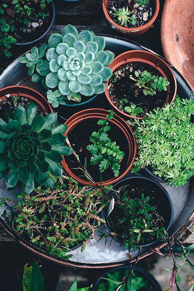 Troc Plantes de Fouras
