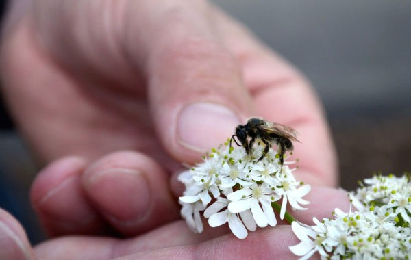 Découvrez la diversité du monde des abeilles avec Karine Devot