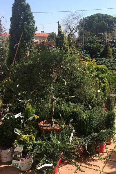 La Jardinerie du Languedoc ouvre ses portes