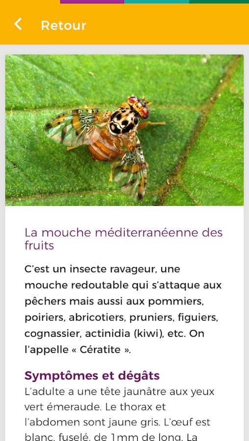 Exemple de maladie de plante