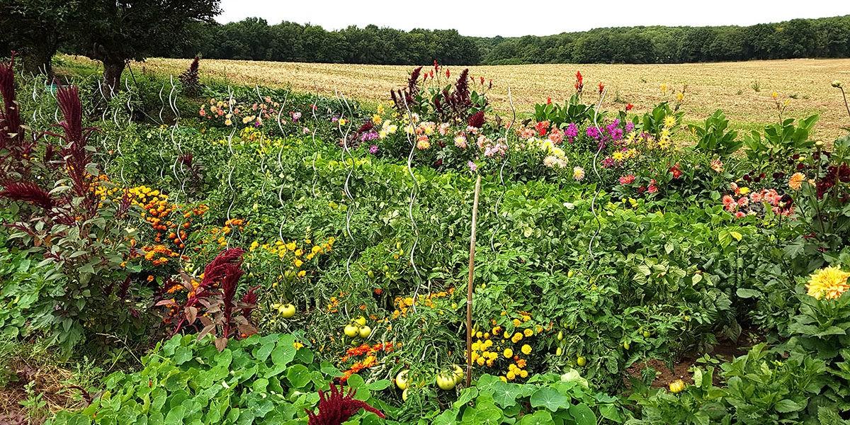 L'UPJ créé une appli pour soigner les plantes