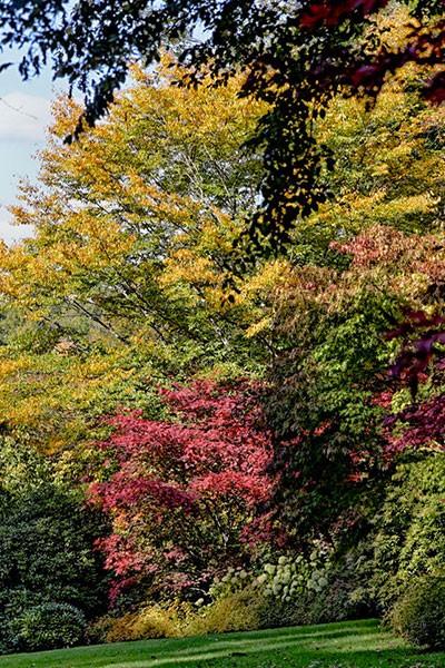 Journées des Plantes de l'Arboretum de la Sédelle