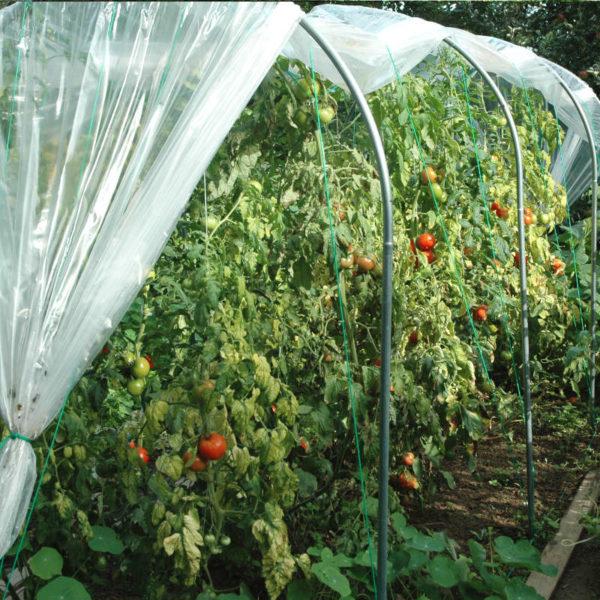 Abri temporaire à tomates