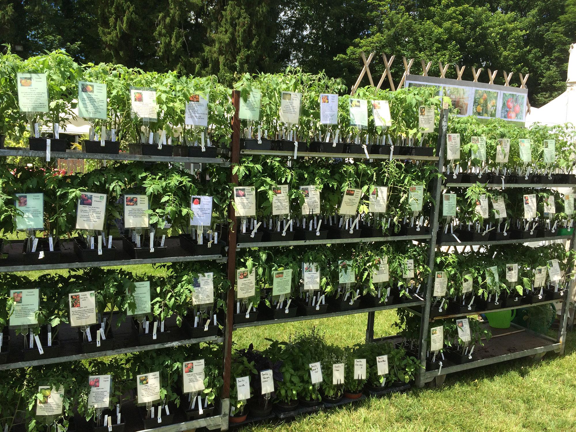 Tomates des Jardins d'Ollivier