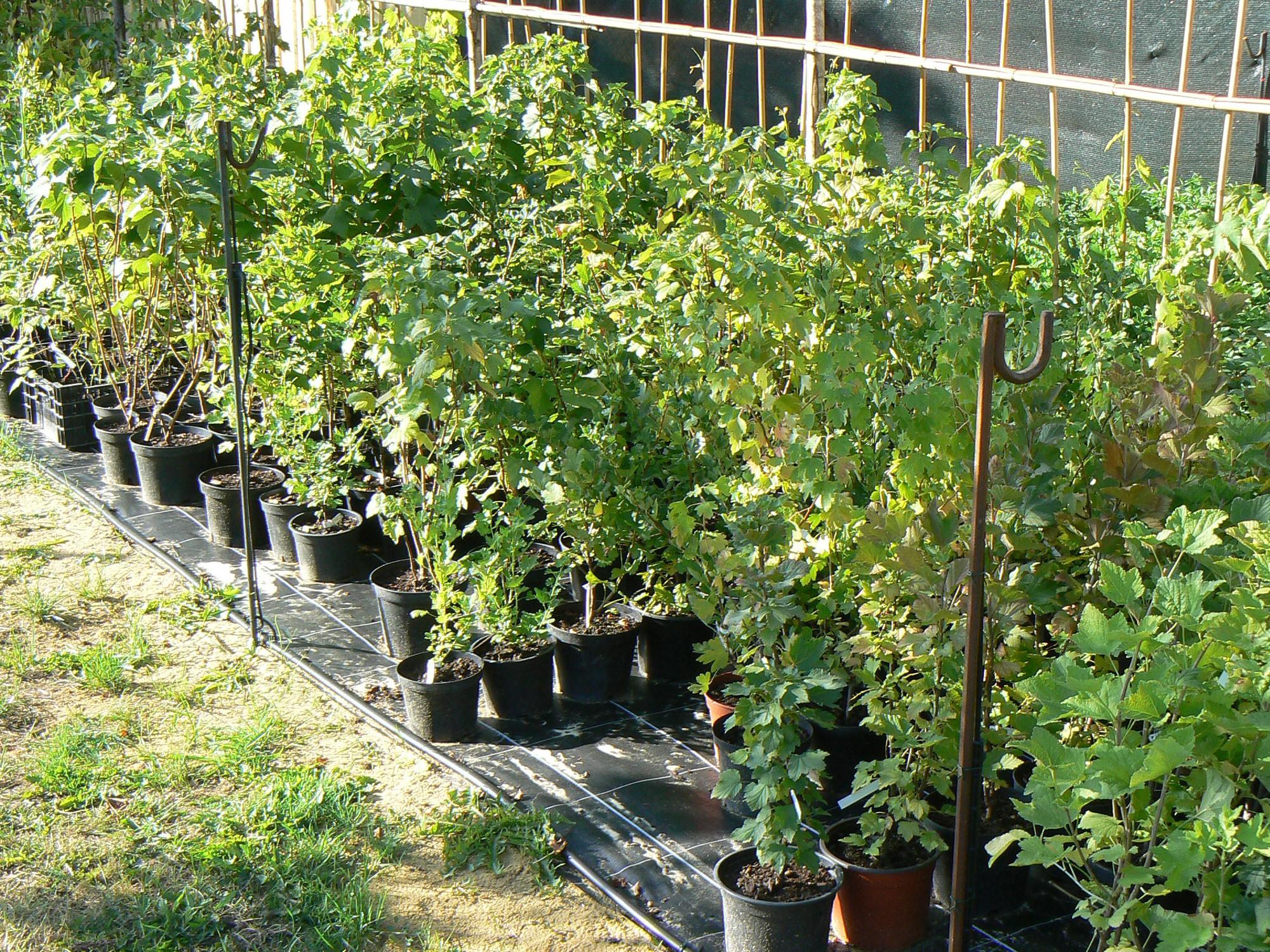 Fruitiers des Jardins d'Ollivier