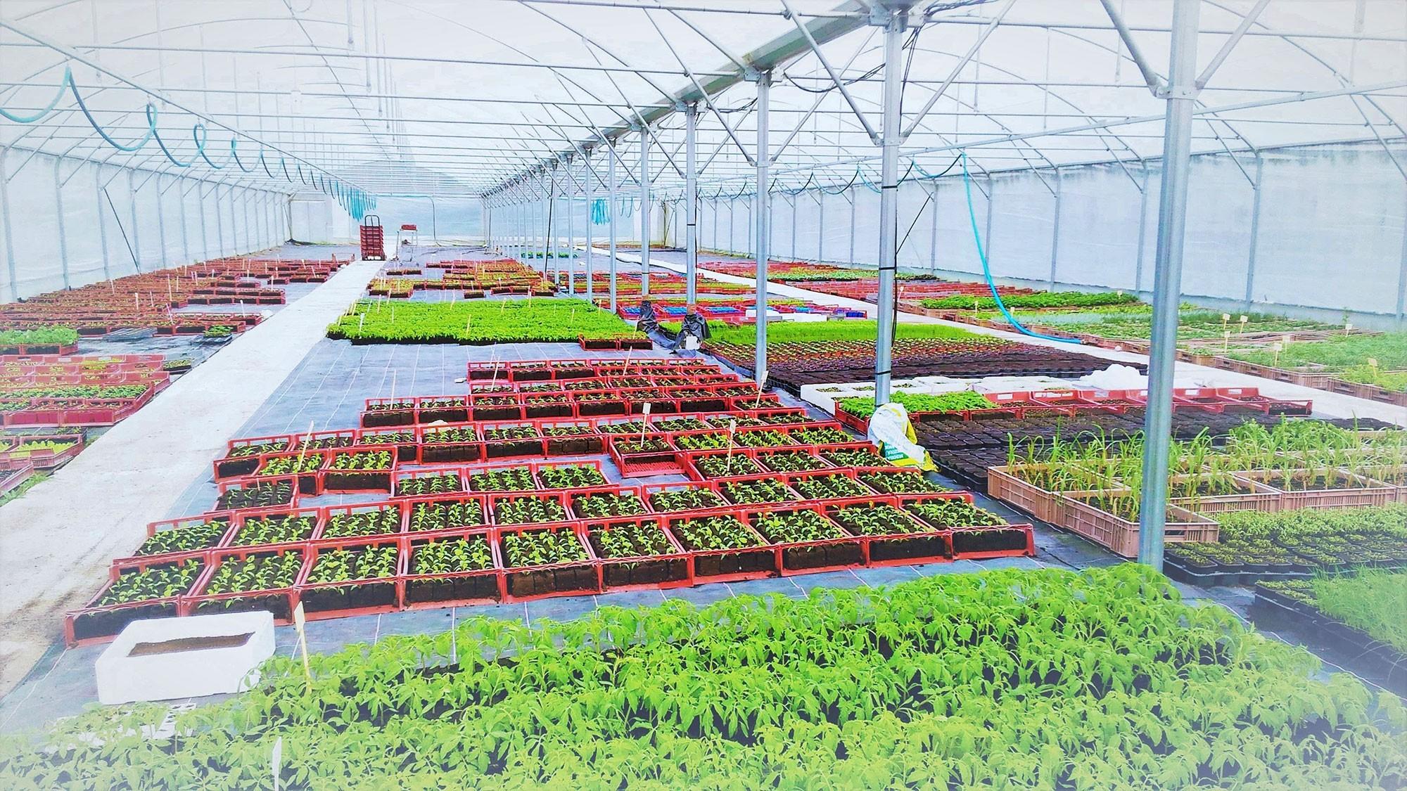 Exploitation Les Bio Plants du Potager