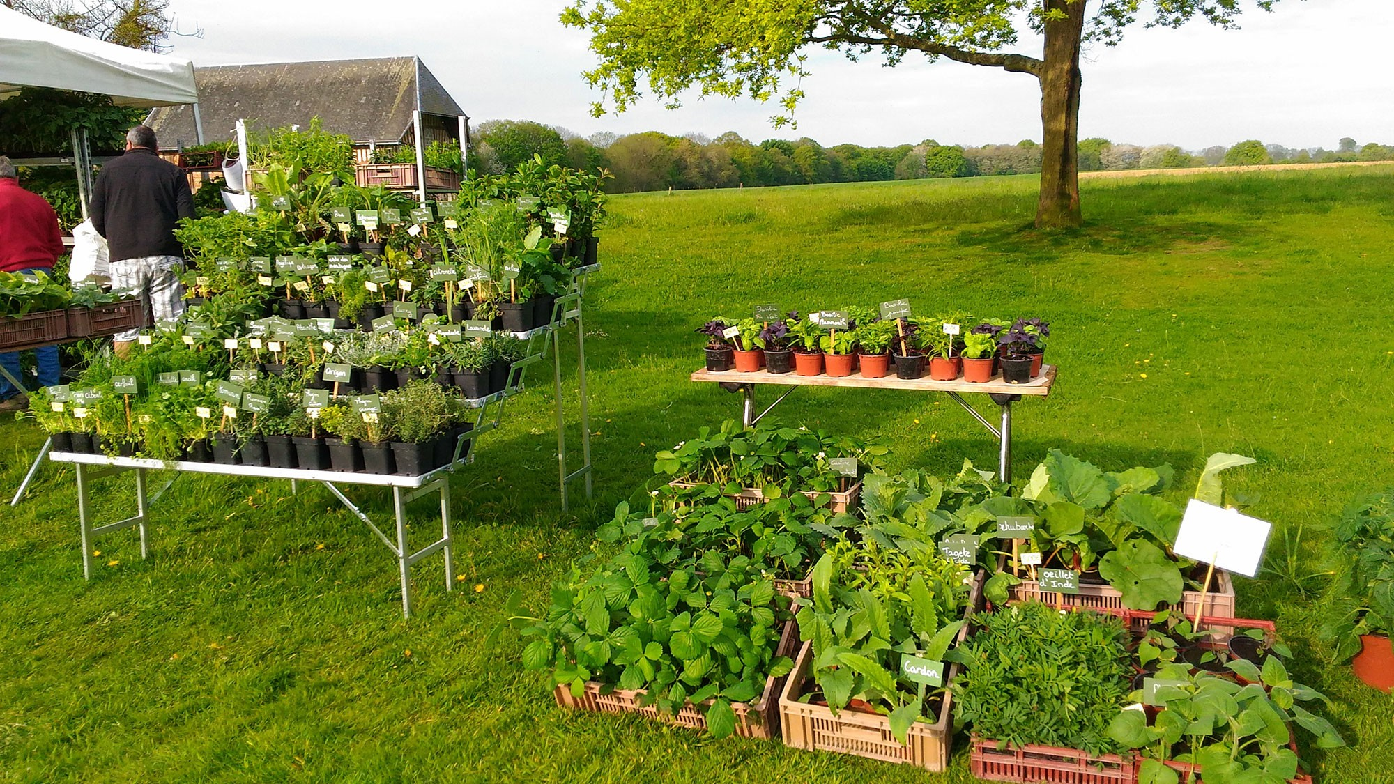 les bio plants du potager producteurs de plants potagers bio. Black Bedroom Furniture Sets. Home Design Ideas