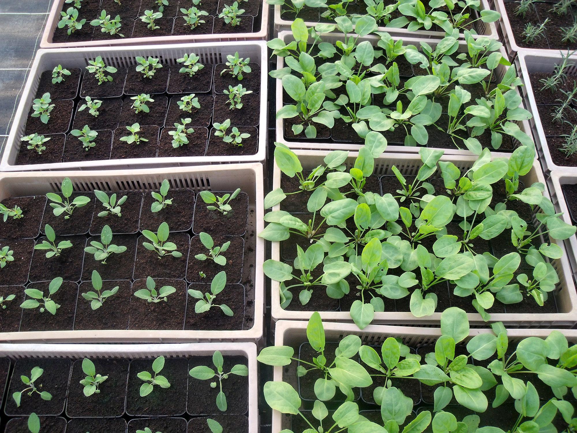 Les Bio Plants du Potager