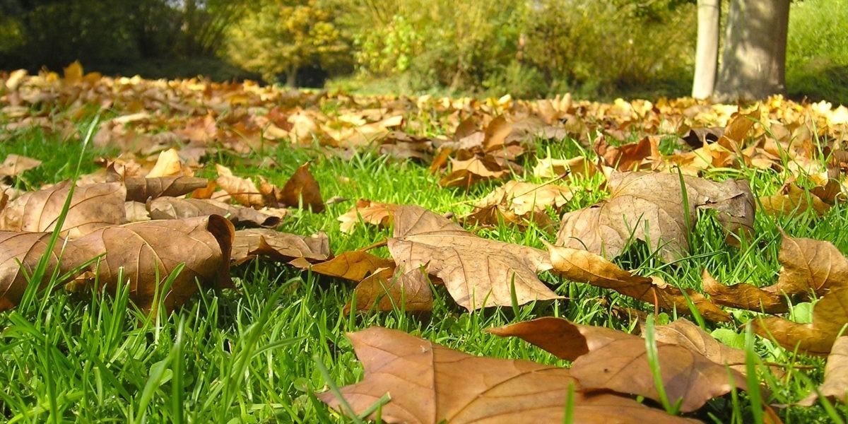 Comment utiliser les feuilles mortes au jardin ?