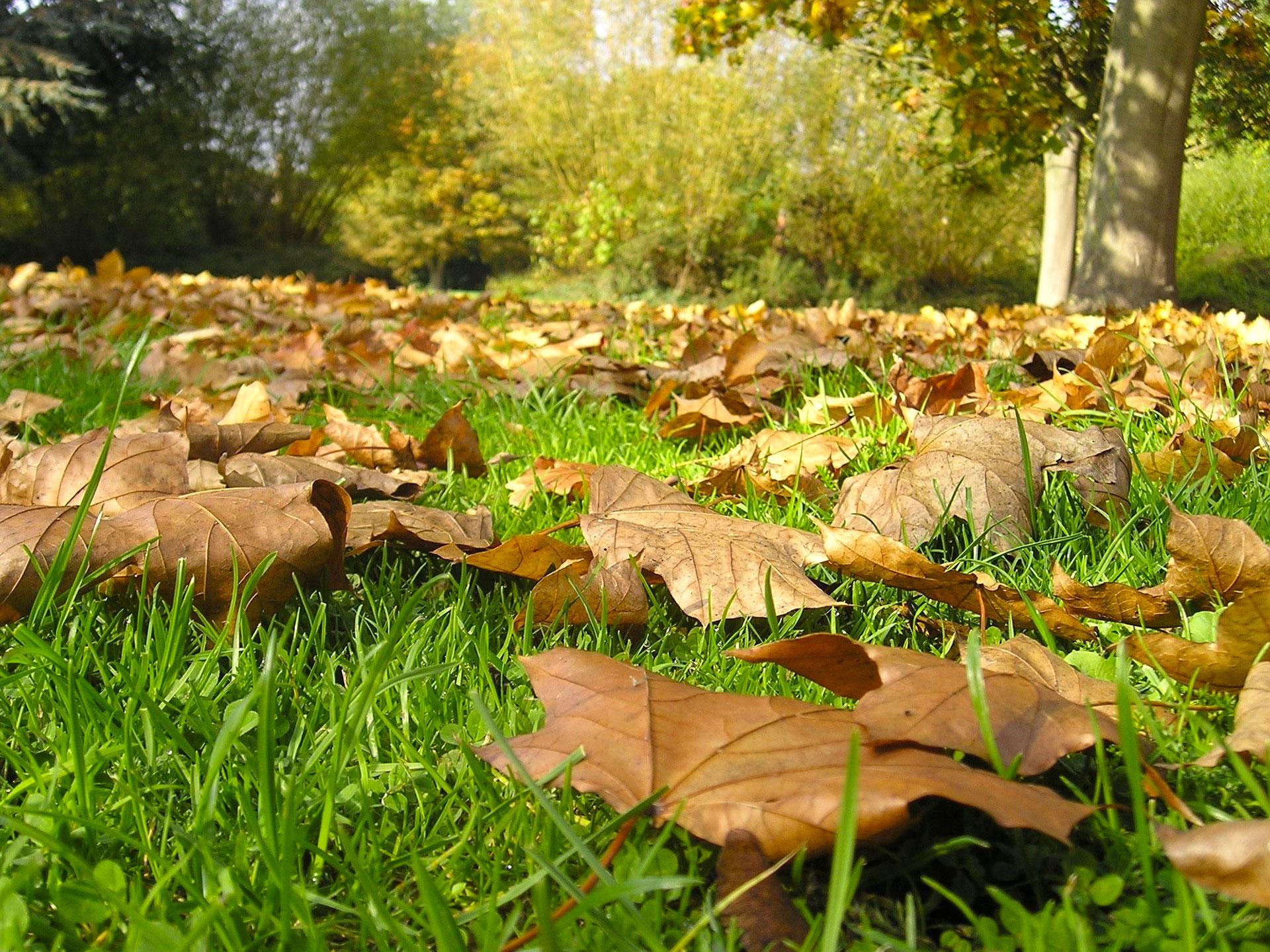 Compost De Feuilles D Érable comment utiliser les feuilles mortes au jardin ? - blog jardin
