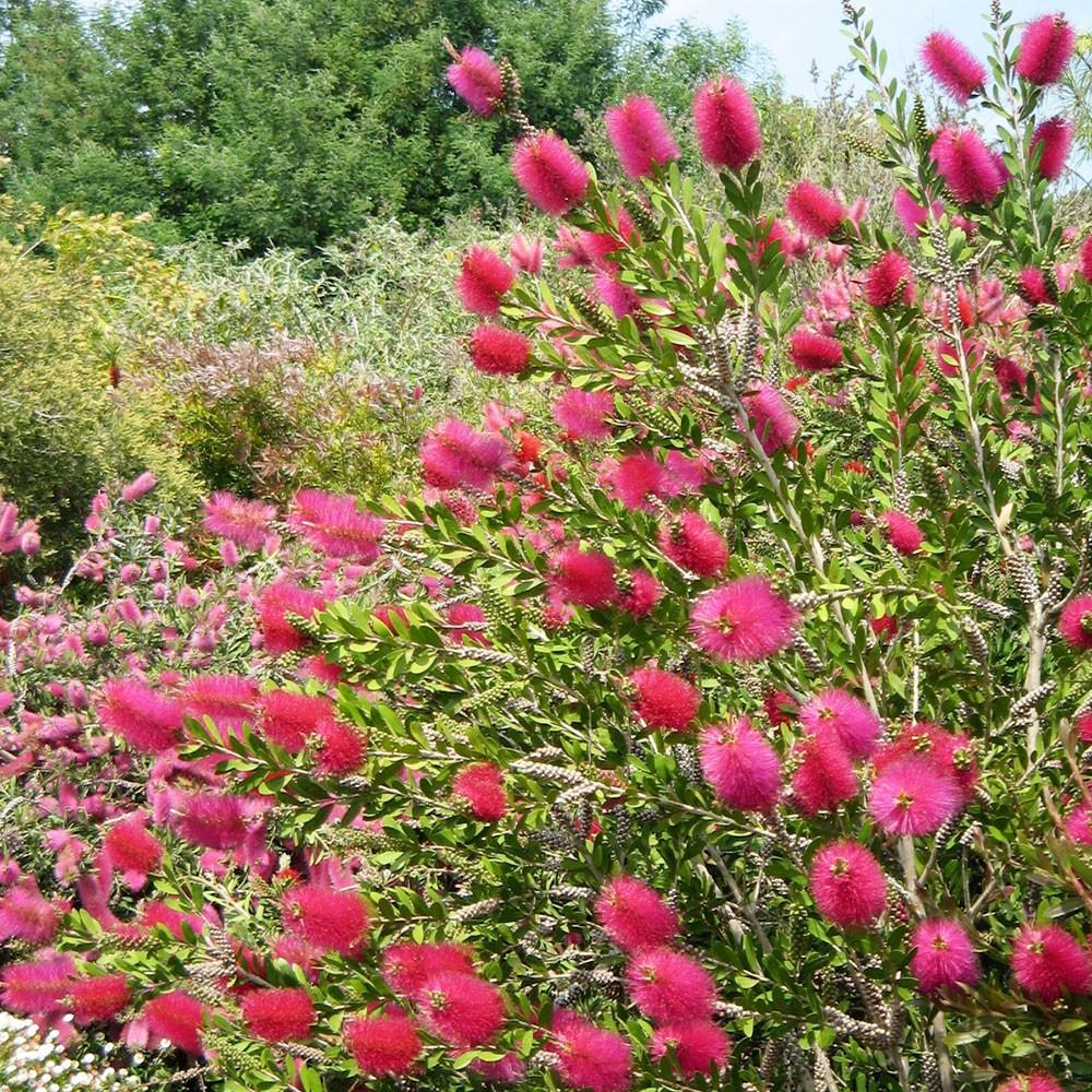 Plantes De Terrasse Arbustes coffret plantes et arbustes pour terrasses et balcons - boutique du jardin