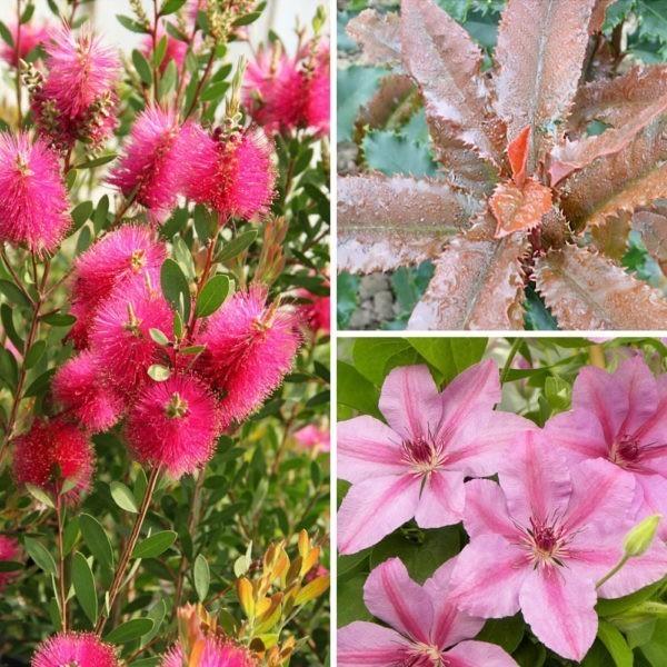 Coffret plantes et arbustes