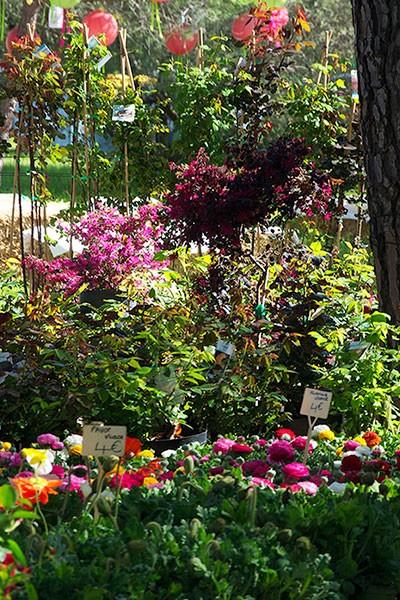 Festival des Fleurs et des Plantes de Sommières