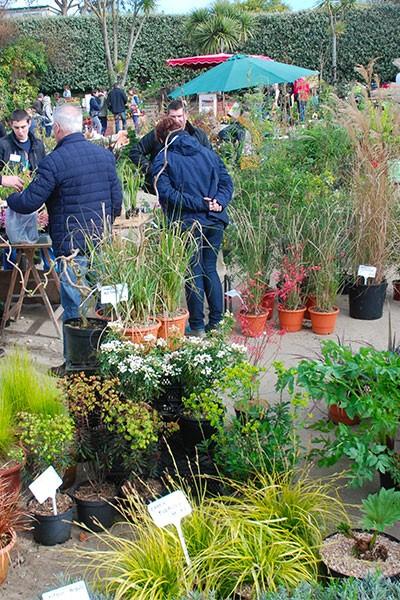 Printemps au Jardin exotique et botanique de Roscoff