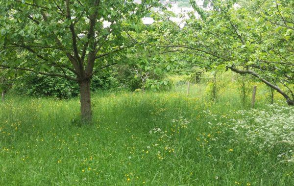 Cherche jardinier pas cher free dco jardin matriel for Cherche paysagiste