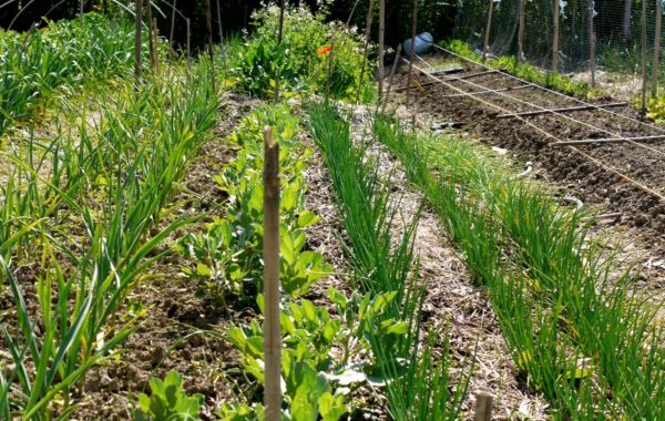 Pr t de jardin savez vous planter chez nous for Cherche jardinier toulouse