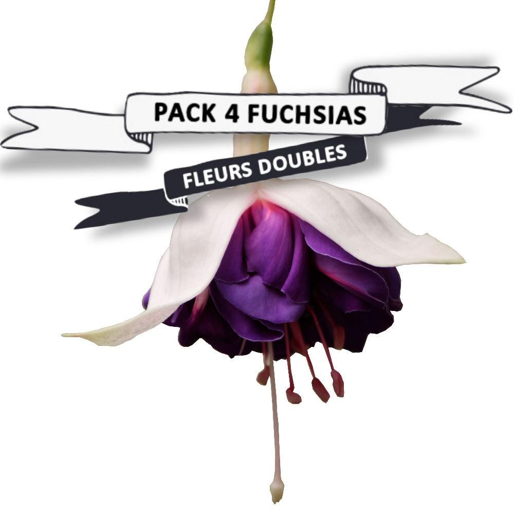 Pack Fuchsias fleurs doubles