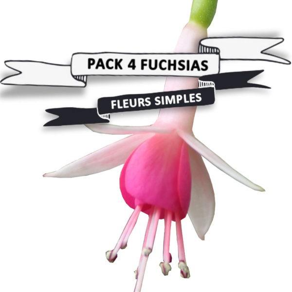 Pack Fuchsias fleurs simples