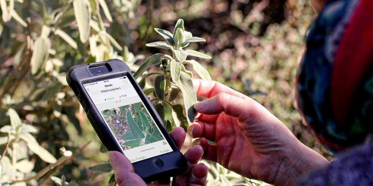 Pl@ntNet : l'application qui identifie les végétaux