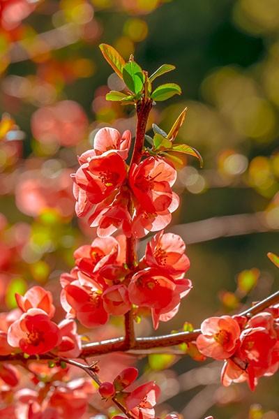 La vallée aux plantes et aux fleurs d'Argenteuil