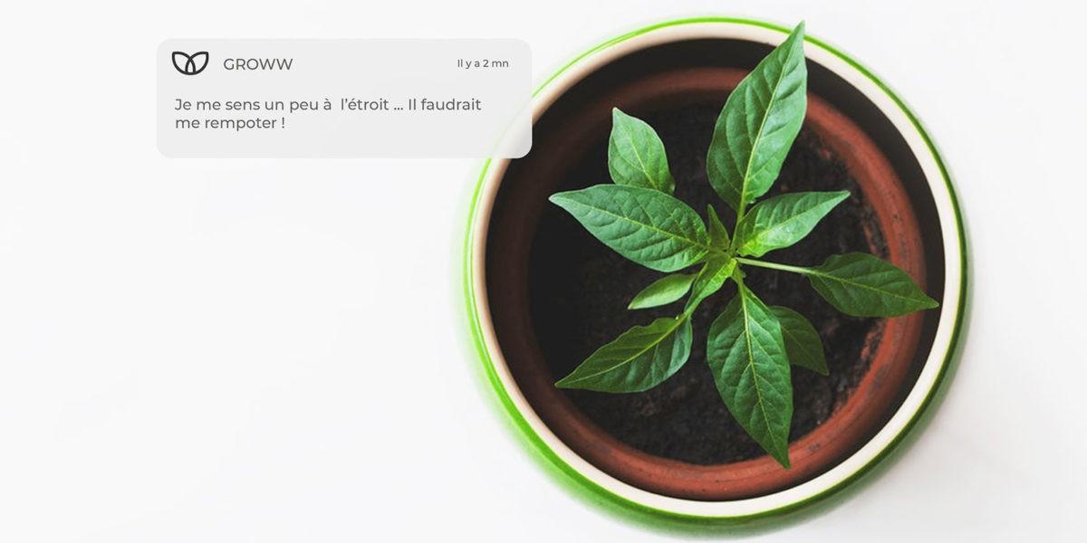 Groww, l'appli qui rend le jardinage bête comme chou !