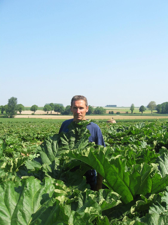 Matthieu Vermes, producteur de rhubarbes