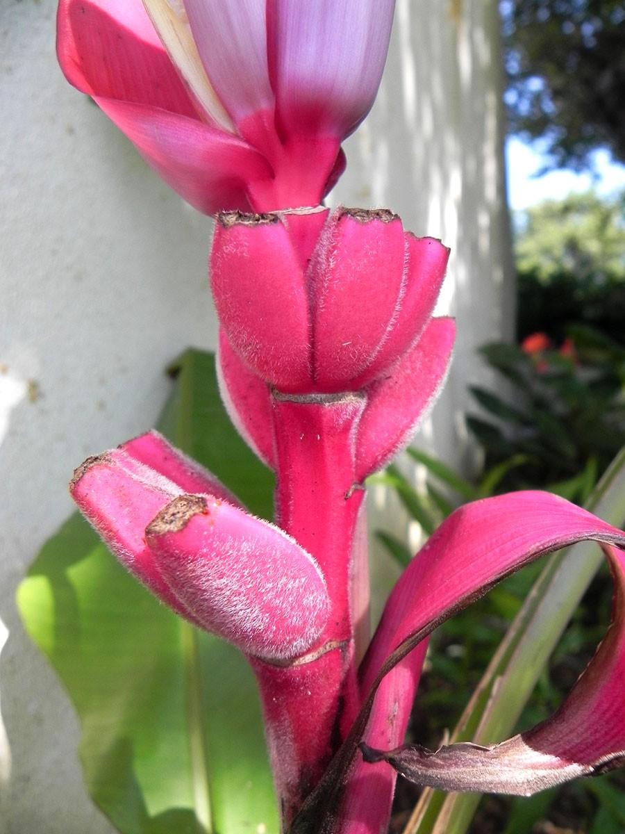 Pépinière Côte et Tropique