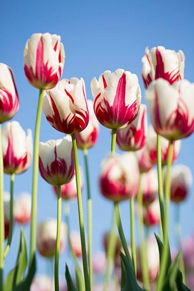 Foire aux Fleurs et produits Régionaux