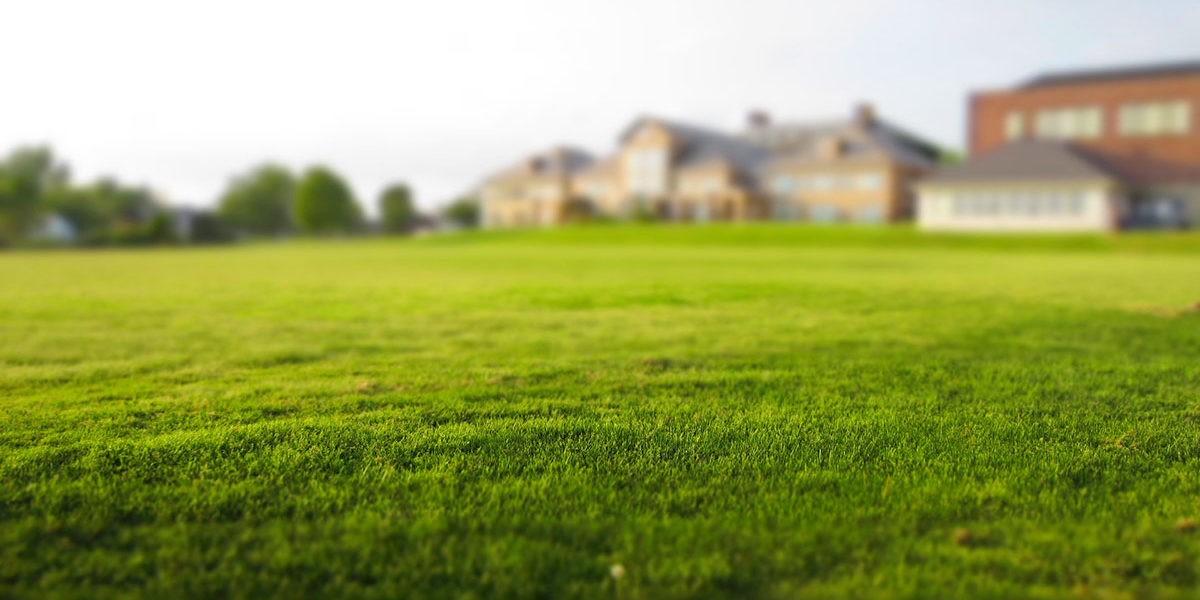 Croq'Mousse : une solution naturelle pour entretenir votre pelouse