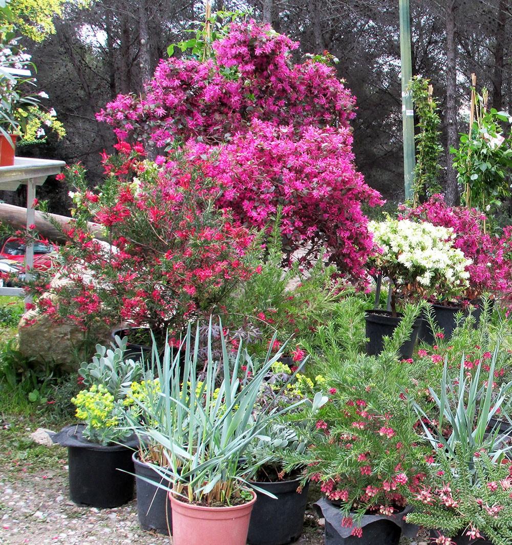 Les plantes de la pépinière Sempervirens