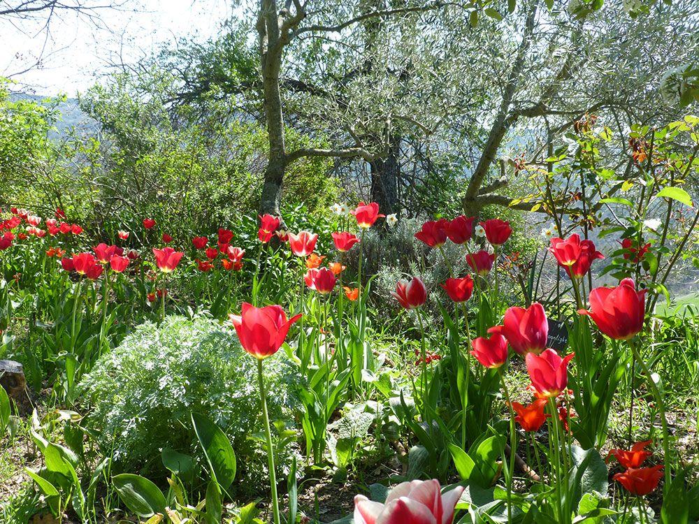 Parc floral des Jardins de l'Abbaye de Valsaintes