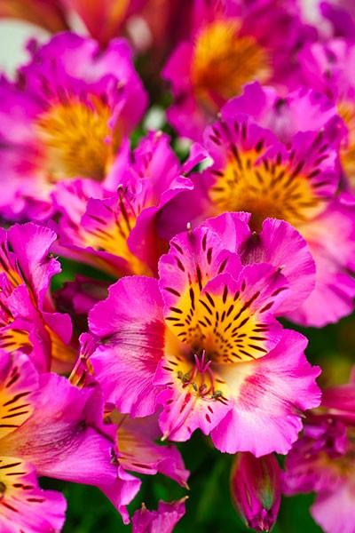 Foire aux Plantes Rares et au Jardin de Mirmande