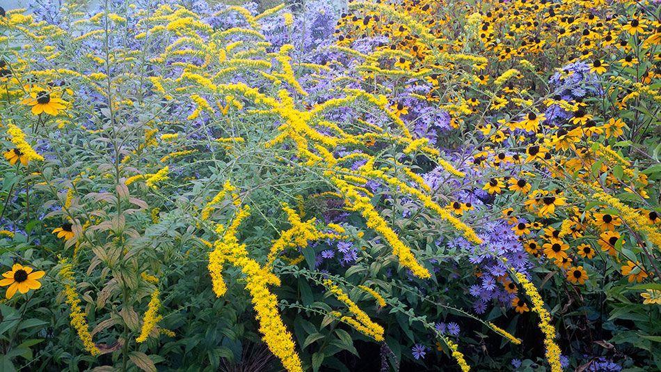 Plantes vivaces d'automne