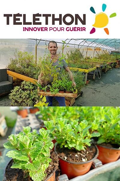 Vente de plantes au profit du Téléthon