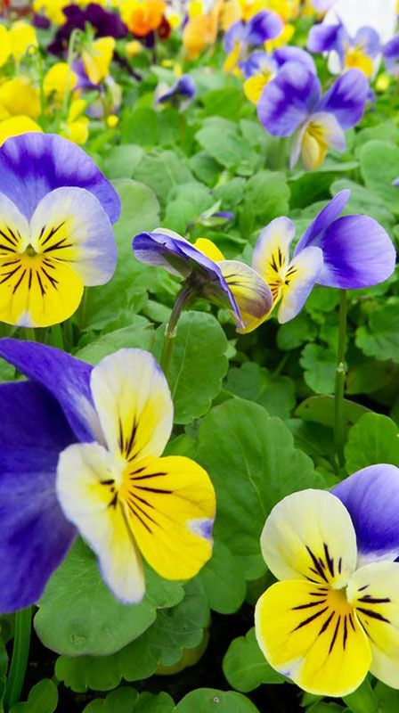 Les fleurs de la pépinière Jeanne Horticulture
