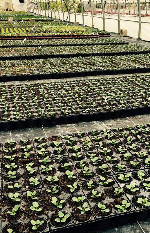Serres de production de Jeanne Horticulture
