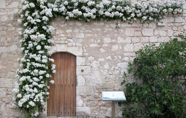 Les roses anciennes d'André Eve