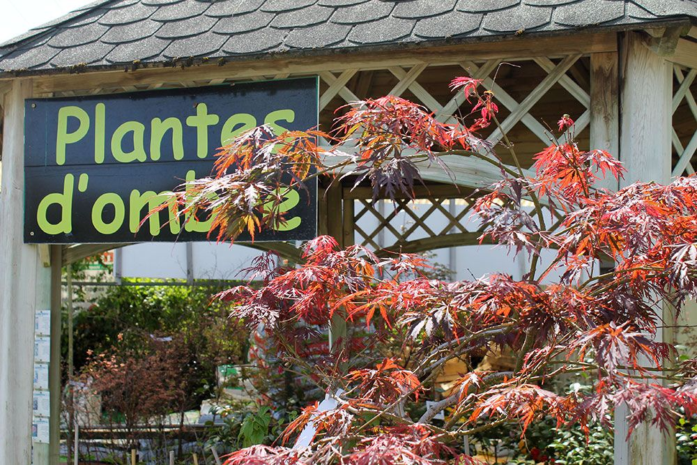 Les plantes d'ombre des pépinières Toulze